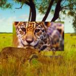 Музыка из рекламы LG OLED TV «Совершенство всех цветов» 2018