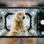 Музыка из рекламы iPhone 11 Pro МТС с собакой