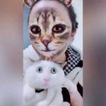 Приложение, где вместо лица кошачья мордочка