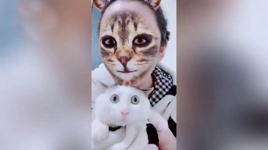 cat_filter