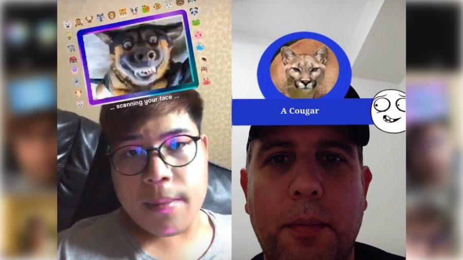 Animal Filter on Instagram