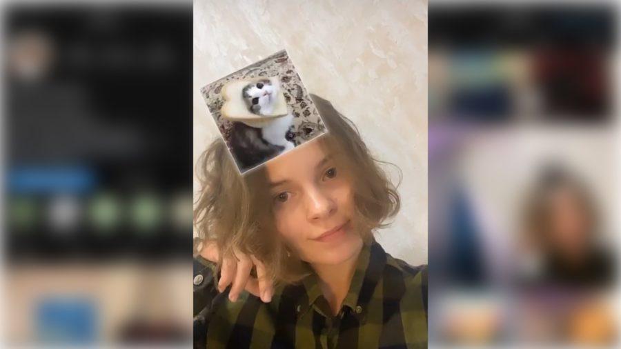 Cat Filter on Instagram