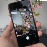 Сколько мегапикселей камера в iPhone SE 2 (2020)?