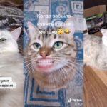 Как сделать говорящего кота в Тик Ток?
