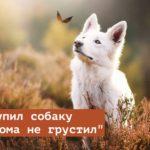 Как называется песня «купил собаку чтобы дома не грустил» из Тик Тока?