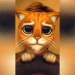 Маска кота в сапогах из Шрека в Инстаграм. Где взять?